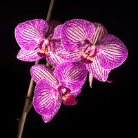 Orchid-IMG-0011-3-2048