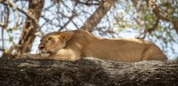 Resting-in-the-shade-MGL3573-2048