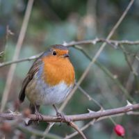 Another-bird-on-a-twig